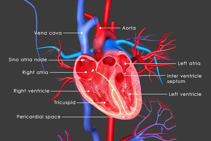 Read about a study of heart tissue from people who had Friedreich's ataxia, finding very low levels of copper and possibly linking this to cardiomyopathy.