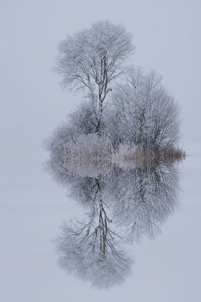 freezing reflections