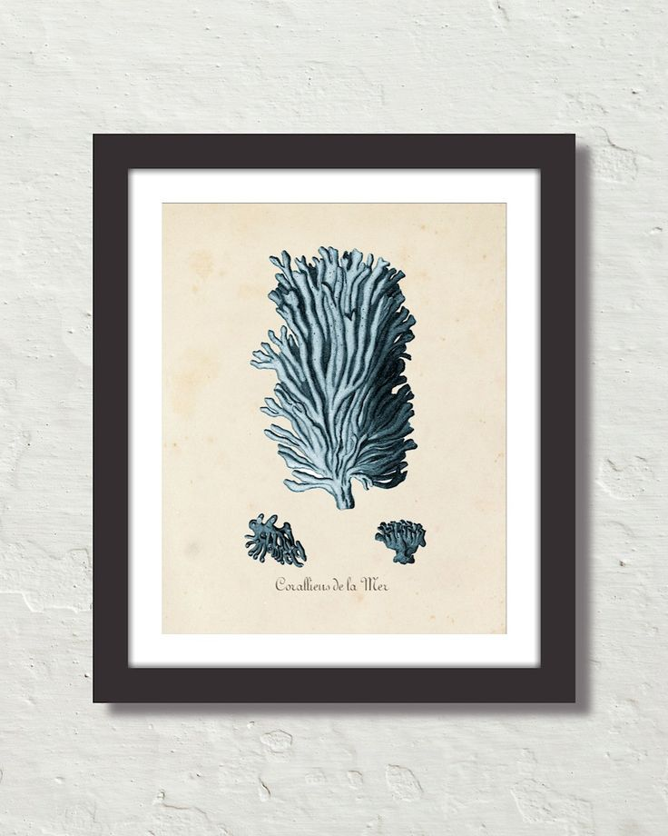 Les Coralliens Blue Sea Coral No. 3 Canvas Art Print