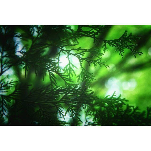 【tagworks】さんのInstagramをピンしています。 《季節は少しずつ次のステージへ。 カレンダーを見なくても、自然はその時を感じています。 雨に濡れたまっすぐな緑色、素敵な癒しをありがとう。 また来年逢いましょう。  #下呂市 #上原 #門和佐 #下呂アンバサダー#田舎暮らし #里山 #スローライフ #デジタルデトックス #自然 #森 #緑 #雨 #秋 #gerostagram #kamihalife#nikon #d810 #sony #nex5n #pics_jp#instagram #instagramjapan#japan #village #slowlife #nature #forest》