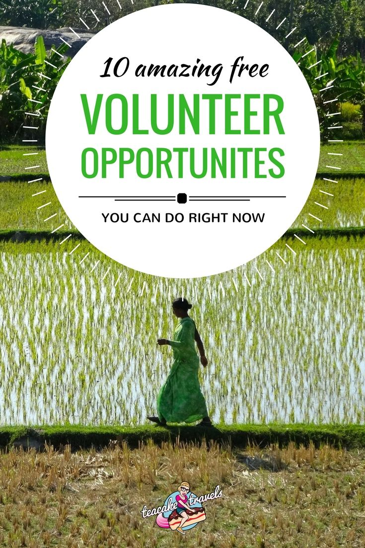 Volunteer Abroad Free Opportunities that are absolutely amazing, you may question if they even do exist. They actually do and you can apply to them right now.
