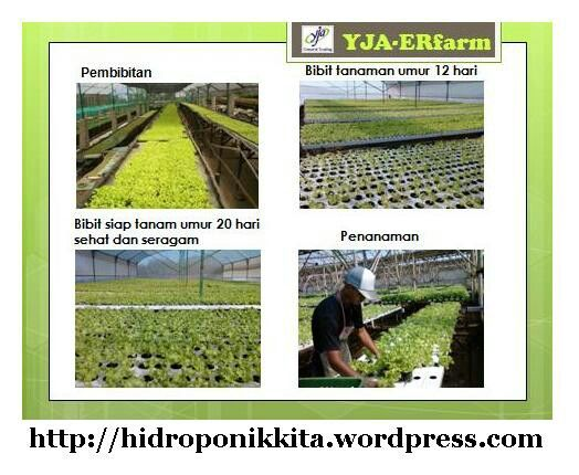 Cultivation of seedlings Hydroponics #YJA-ERfarm