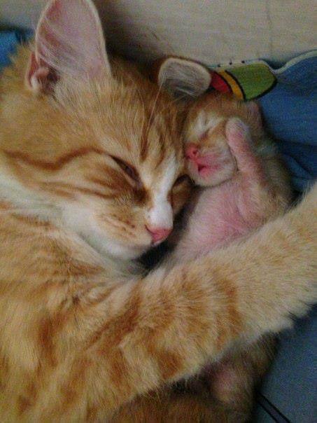 .momma kitty & her kitten.