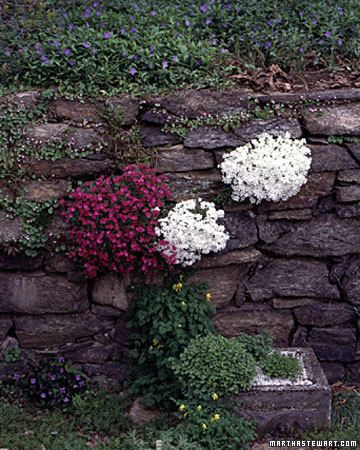 Crack and Crevice Gardening