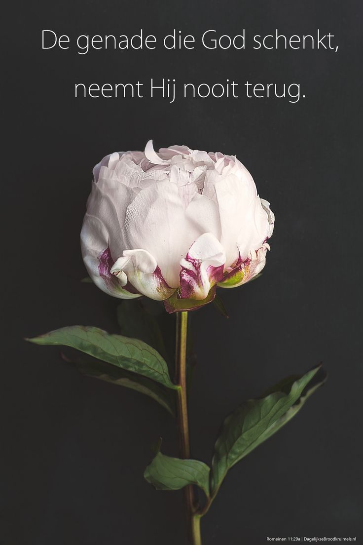 De genade die God schenkt, neemt Hij nooit terug.Romeinen 11:29a  #Genade  https://www.dagelijksebroodkruimels.nl/romeinen-11-29a/