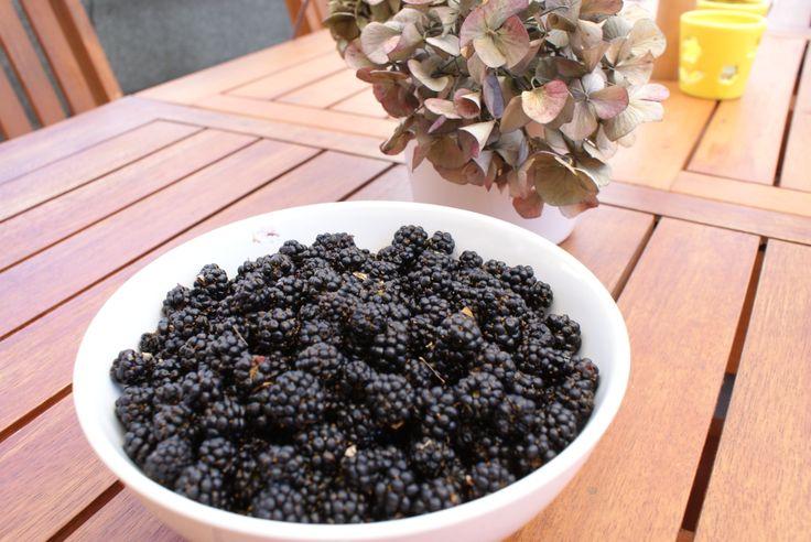 Amoras Selvagens da Quinta | BlackBerrys from the farm