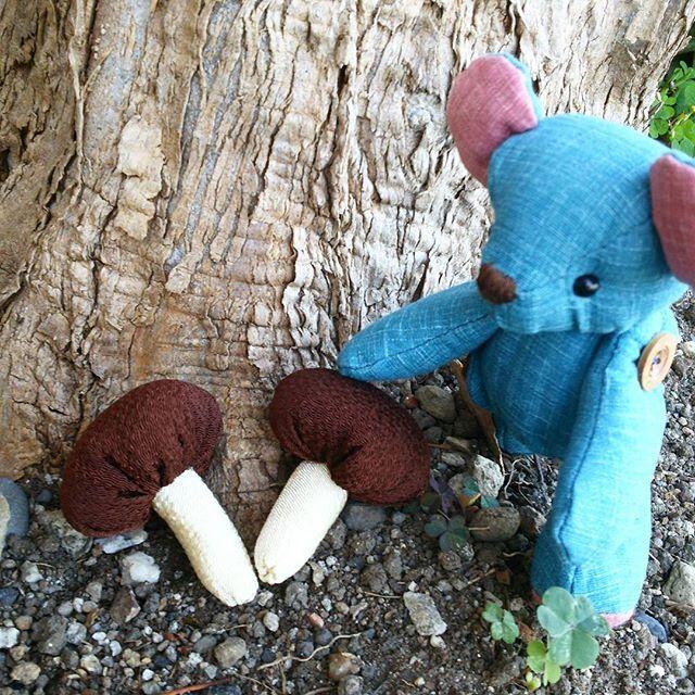 『松茸🍄 発見❗❗』 今日はテディベア🐻の日。 #テディベアの日 #テディベア#松茸狩り#松茸 #きのこ #お散歩 #東亜和裁 #toawasai