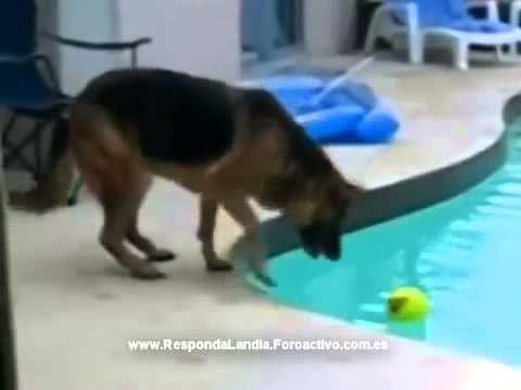 Videos de risa de animales - http://videoswatsapp.com/videos-de-risa-de-animales/ #videowhatsapp #compartirvideos #videoswatsapp