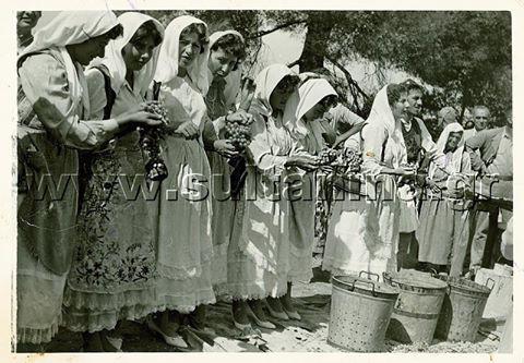 ΑΓΡΟΤΙΣΣΕΣ του Ζεμενού ,όπως αποτυπώθηκαν το 1963 στην γιορτή σταφυλιού.
