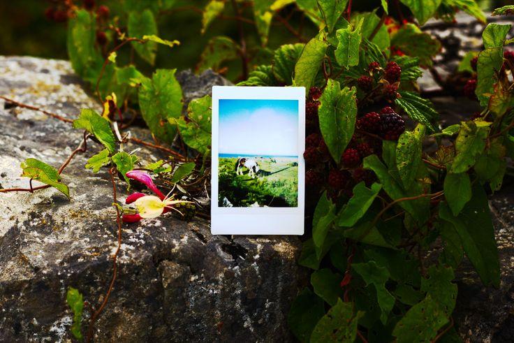 Les Petits Polas | Aran Islands, Kilmurvey