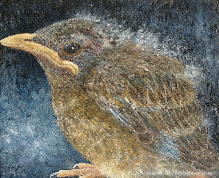 Robin Fledgling. Oil on canvas 2017. 61x50cm