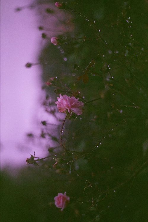 Untitled by inmost_light (Flickr). The shallow depth of field, coloring, and errie beauty interested me with this photo.