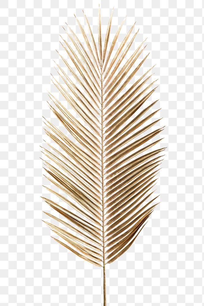 Areca Palm Leaf Painted In Gold Design Element Premium Image By Rawpixel Com Teddy Rawpi Gold Design Background Photoshop Design Ideas Gold Wallpaper Phone