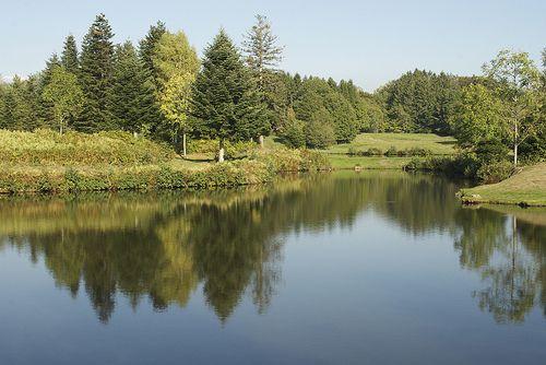 Les 1000 étangs... verdoyants ! Exposition en ligne réalisée par l'Office de Tourisme des Mille Etangs (www.les1000etangs.com)
