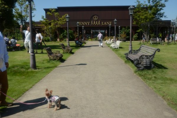 茨城デート⑤ つくばペニーレイン  ミックス犬マルプー ごろまるの成長日記