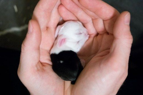dawwwwfactory: I co-run a bunny rescue and our recent rescue...