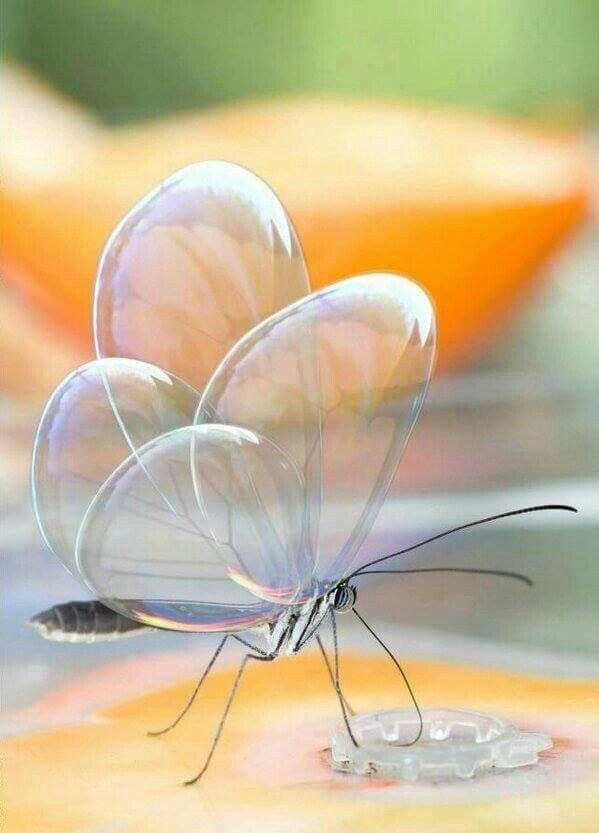 Magic Glasswinged butterfly