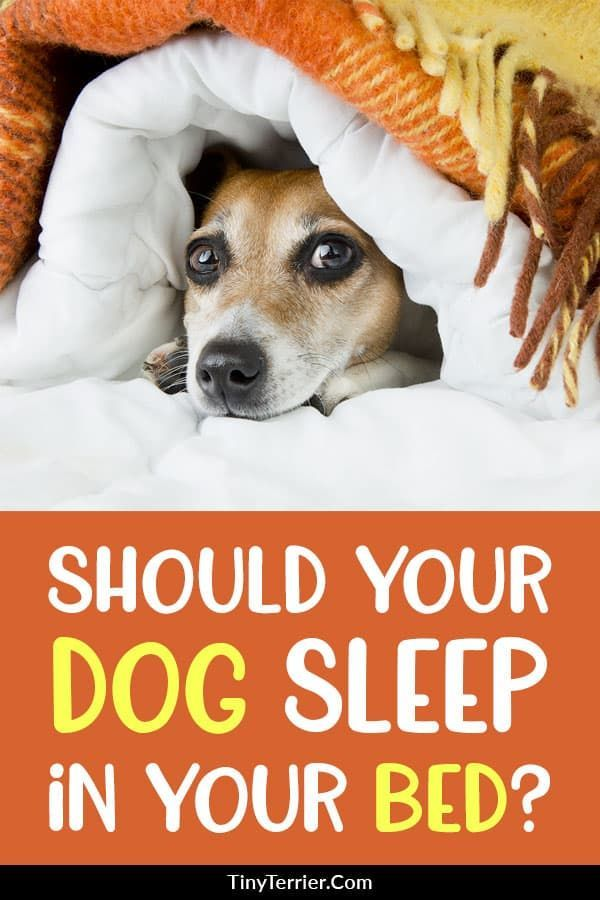 74c1a453d15f1ff7e2264a42dc4ac1a3 - How Do I Get My Puppy To Sleep In His Bed