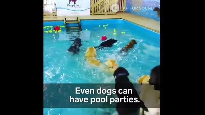 Lihat Senangnya Anjing-anjing Ini di Surga Taman Bermain Bagi Peliharaan, Bikin…