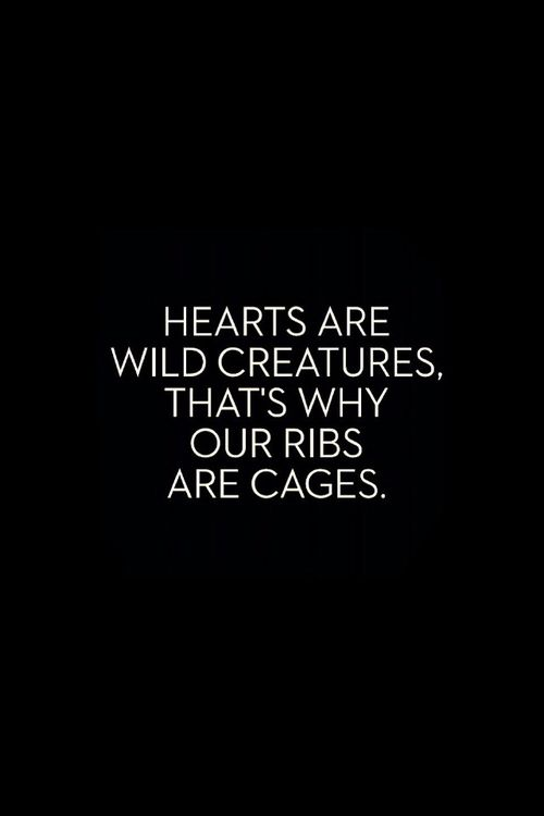 Heart are wild creatures. That's why our ribs are cages. #quotes #words