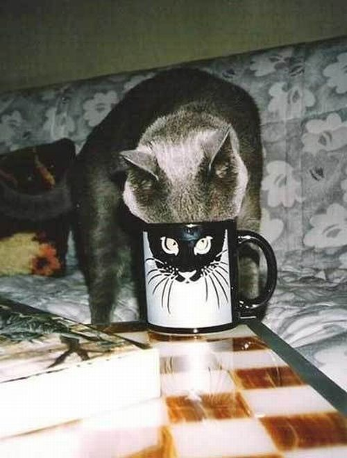 cat.Funny Pics, Funny Animal Pics, Funny Pictures, Coffe Cups, Funny Cat, Mugs Shots, Mornings Coffe, Kitty, Silly Cat