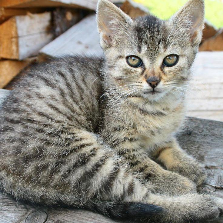 Cómo hacer repelente de gatos. No importa cuanto ames a los gatos, hay algunos lugares donde a los gatitos les encanta ir pero nosotros no los queremos que vayan. Dado que son escaladores y saltadores expertos, no tienen respeto po...
