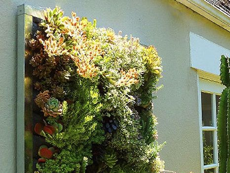 Utilise Space With a Living Wall! | Jersey Plants Direct Blog