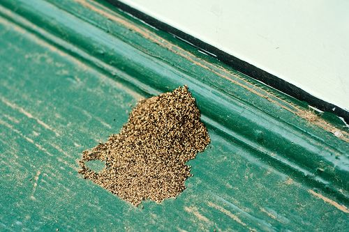 Pile of Termite Droppings