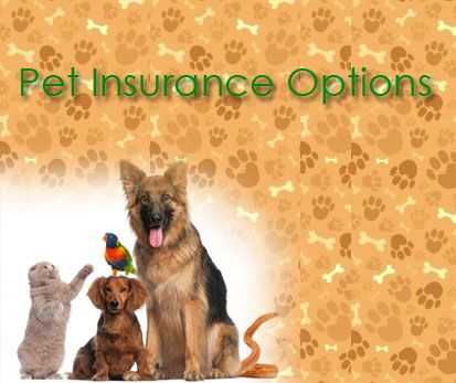Welcome on pet insurance options visit us at http://www.petinsuranceoptions.com/