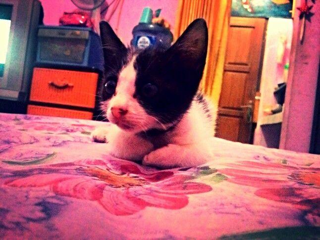 Morris, little cat.