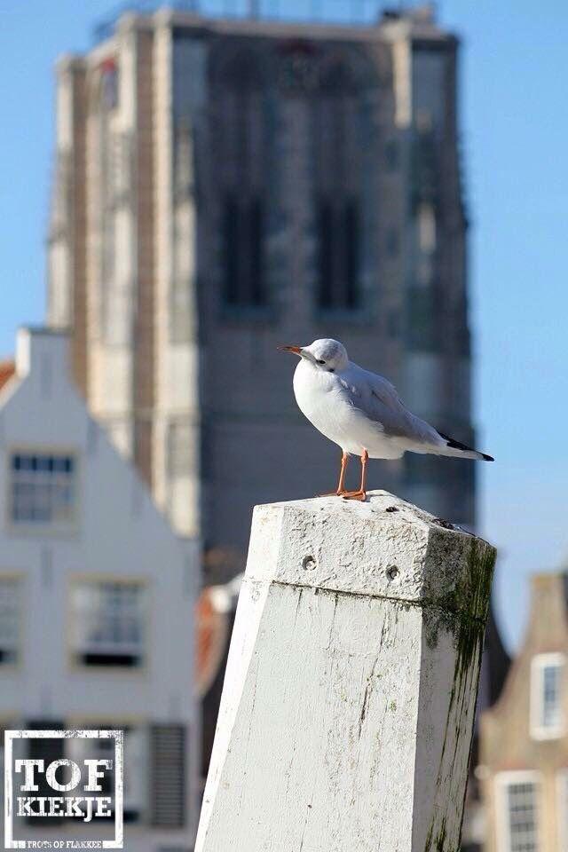 Goedereede foto Patricia in t Veld