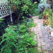 芝生/庭/部屋全体に関連する他の写真