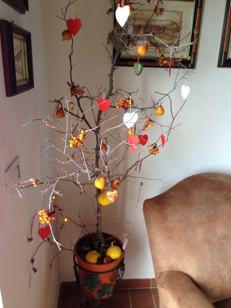 Il nostro albero delle stagioni a San Valentino