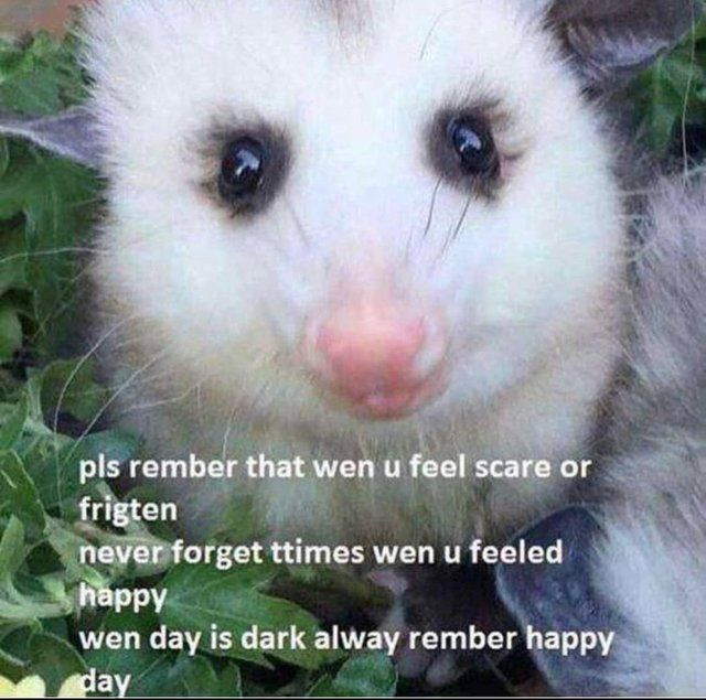 Wholesomememes On Twitter Opossum Animals Awesome Possum