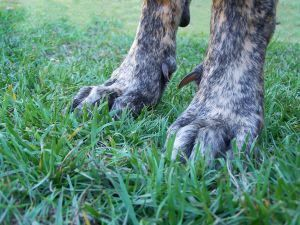 Werewolf Sightings | Five Real Werewolf Sightings! | Werewolves