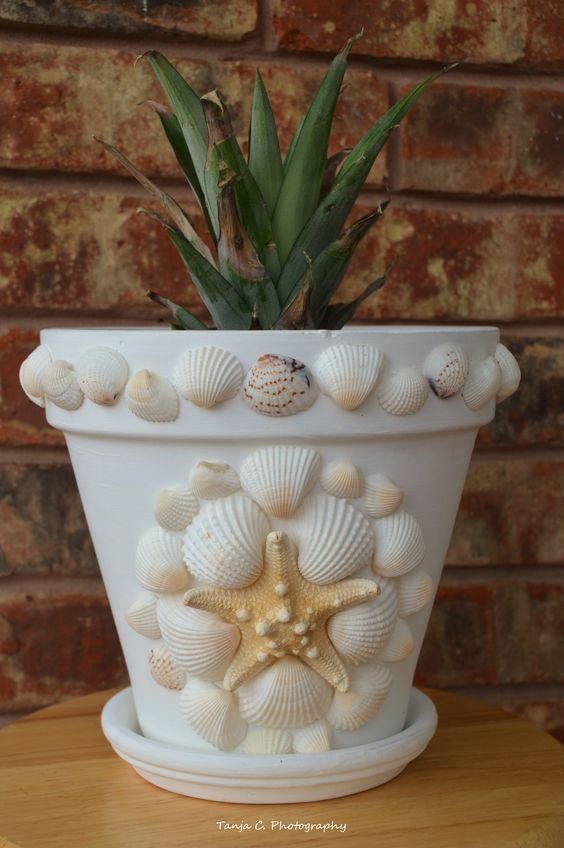 My lovely sea shell flower pot with a pineapple plant. ~ Tanja https://www.facebook.com/134399266770269/photos/a.147642568779272.1073741845.134399266770269/234046700138858/?type=1theater: