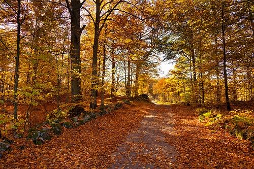 Hösten som var...