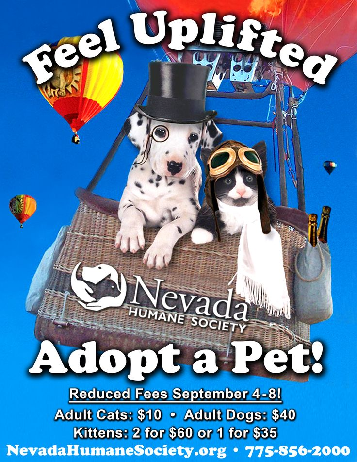 33 best nhs events and fundraisers images on pinterest fundraisers the great reno balloon race is for pets too solutioingenieria Gallery