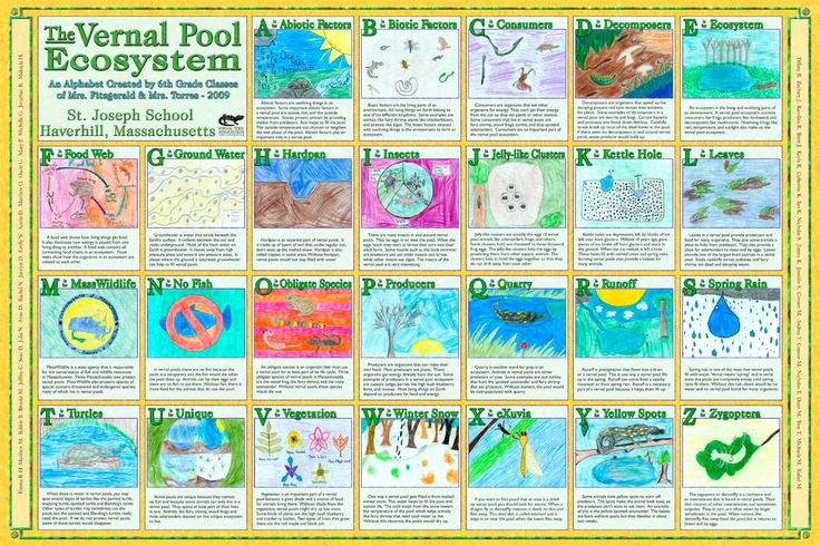 Vernal Pool Ecosystem ABCs. Great for a unit study on ecosystems or water biology.