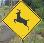 deer crossing sign reminds me of michigan