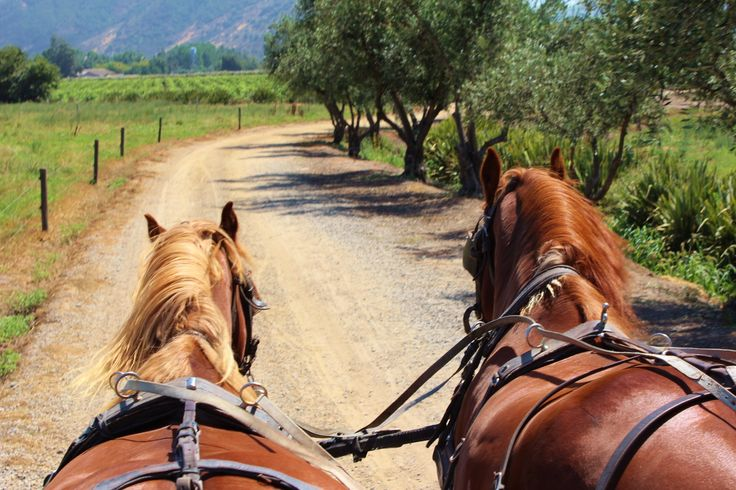 Horse cart at Viu Manent Winery - Colchagua Valley Chile #winery tour Chile Off Track www.chileofftrack.com