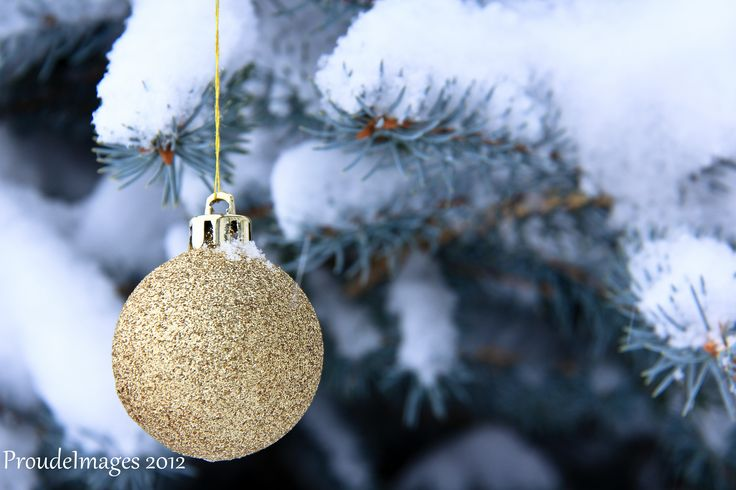 Gold ornament on tree