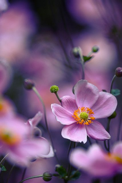 Pretty Cosmos.....a super easy wildflower to grow and adds great color to the yard.  It's especially good to plant in areas where it's hard to mow or plant anything else.