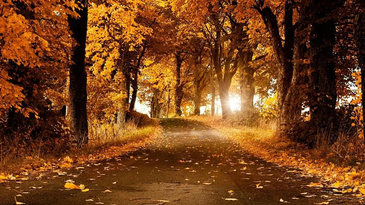 Top Forest - Nature - Foliage - Trees 04 http://www.wallpapersu.com/the-best-wallpapers-forest-nature-foliage-trees-sky/