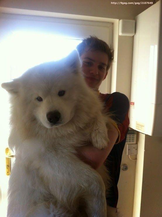 17 Perros Enormes Que No Tienen Idea De Lo Grandes Que Son. El #7 Es Mi Preferido.