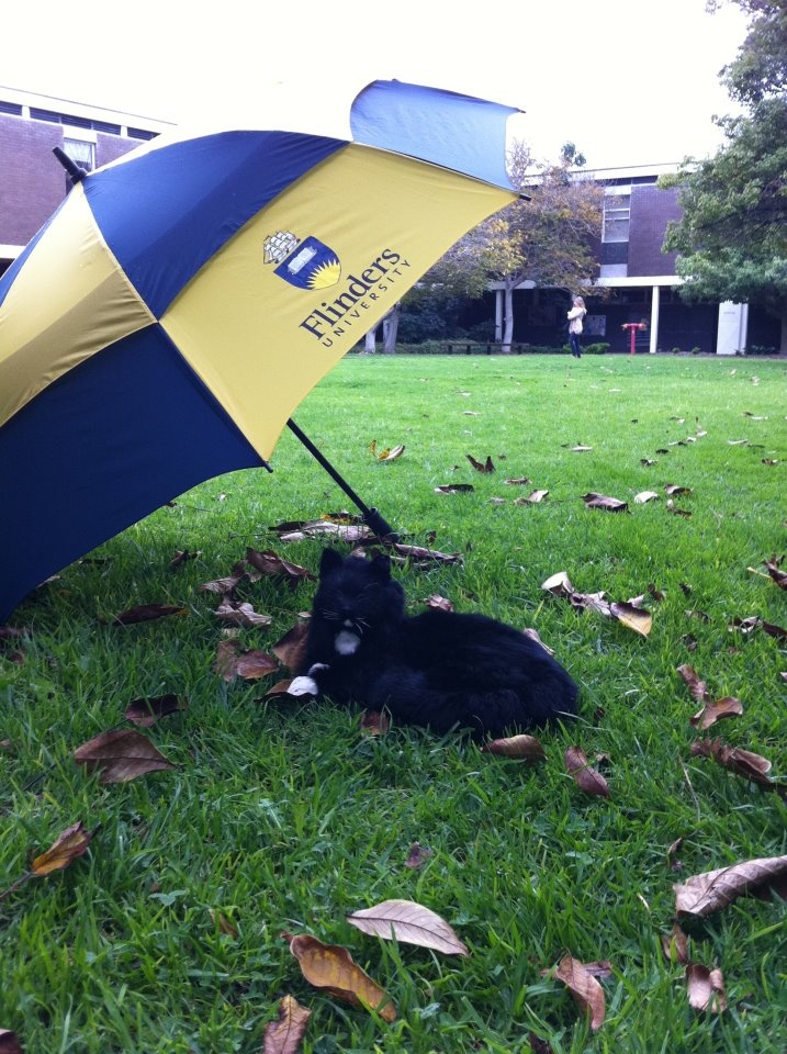 After circumnavigating Australia in 1801, 1802 & 1803, you might think that Trim would be used to a little water …. Think again! Trim has been spotted on campus today trying to stay dry! Can you guess where he is?