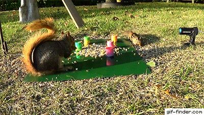 Squirrel shoots slinky at chipmunk