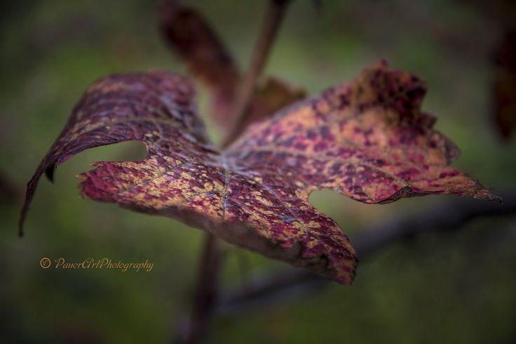 https://flic.kr/p/NbeHeG | Autumn www.emlekkepfotografia.hu