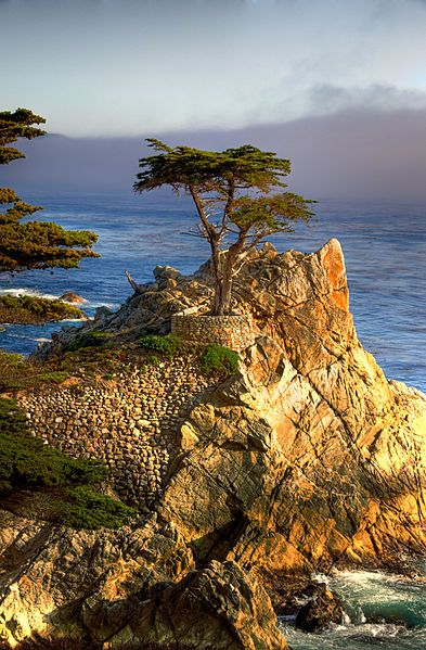 Lone Cypress, sitting atop a rocky outcropping, was recreated as the logo for Pebble Beach Golf Course.  You will find it along 17 Mile Drive.
