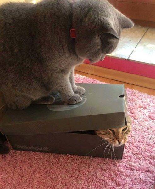""" Ferme ta boite à camembert et commence à te taire !"""